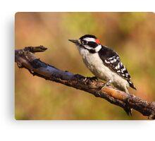 Downy Woodpecker / Male Canvas Print