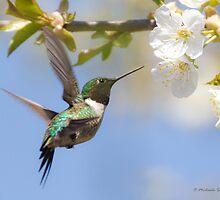 Ruby-throated Hummingbird by PixlPixi