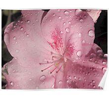 Raindrop Azalia Poster