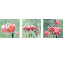Tulip Collage Photographic Print