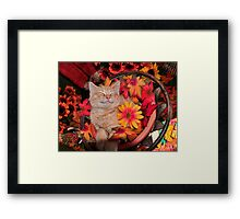 Good Morning Smile ~ Cute Kitty Cat Kitten in Fall Colors taking a Nap Framed Print