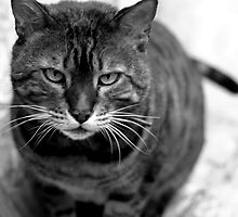 Cat Look At ... What!!! by Daniel Chang