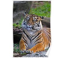 Tiger Watercolour Poster