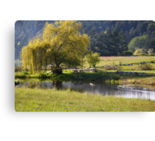 spring by the pond  Canvas Print