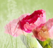 carnation garden by lensbaby