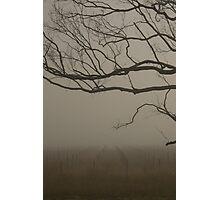 Misty Vineyard Photographic Print