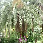 Dazziling flowers climbing up magestic palm tree by Joseph Green