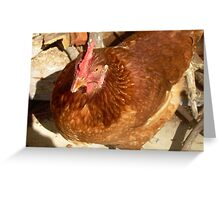 Chicken in the woodpile Greeting Card