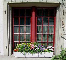 Spring Window by RightSideDown