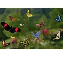 Butterfly joy Photographic Print