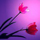 THE SIMPLE JOY by RoseMarie747