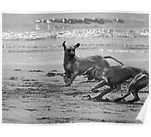 dogs running on beach Poster
