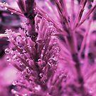 Pink Pearls by Marina Herceg