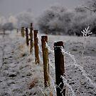 Fence post by Karen  Betts