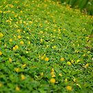 yellow and green by iamYUAN