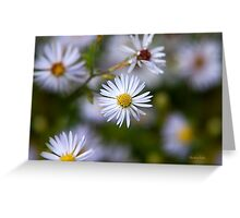 White Aster Flowers Greeting Card
