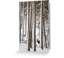 Winter Forest Stag  Greeting Card