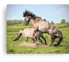 What's the fuzz about? Canvas Print