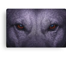 Eyes that see Canvas Print