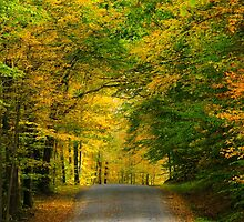 Tunnel of Trees Fall Landscape by Christina Rollo