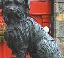 Grey Friars Bobby - close up by anaisnais