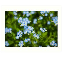 Nature Abstract Wildflowers Forget me nots Art Print