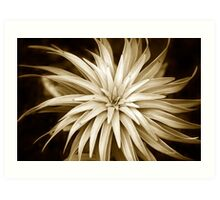 Spiral Abstract Art Monochrome Plant Art Print