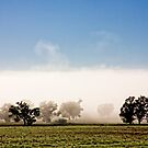 Mist by Carol Ritchie