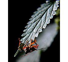 Bug Hiding Photographic Print