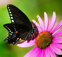 Colorful Butterfly in the Sun by Christina Rollo