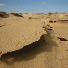 winter desert sands by the beach by Matt Stojko