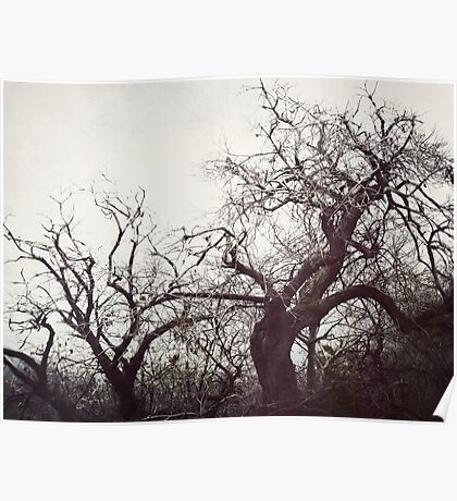 Misty Afternoons Poster
