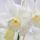 Dreaming Daffodils by Al Duke