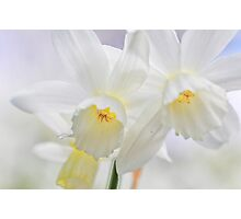 Dreaming Daffodils Photographic Print