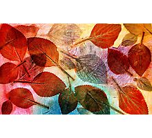 Autumn is Coming to Australia Photographic Print