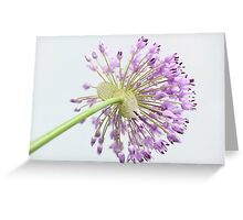 Spread love not hate... Greeting Card
