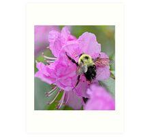 Bumble Bee - Pink Azalea Art Print