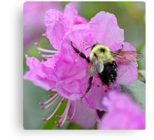Bumble Bee - Pink Azalea Canvas Print