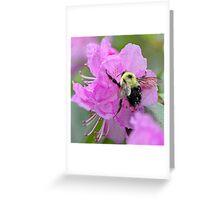 Bumble Bee - Pink Azalea Greeting Card