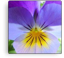 Violet & Pastels Canvas Print