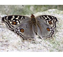 Beautiful Grey Butterfly Resting On A Rock Photographic Print