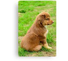 Red TriColor Australian Aussie Shepherd Puppy Canvas Print