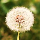 Make a Wish by MichelleRees