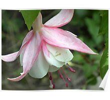 floral 14 Poster
