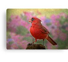 Cardinal in the Garden Canvas Print