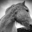 Horse 80/4 by Raymond Kerr