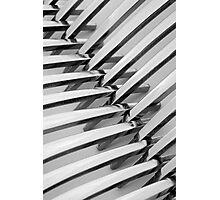 Forks I Photographic Print