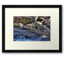 Water Stone Framed Print