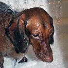 Sad dog taking a shower by maffikus
