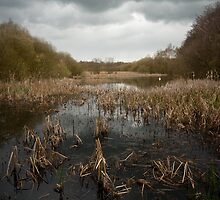 Alvecote Pools by Andy Stafford